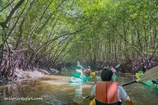 Embraced by mangrove trees - feeling so secure