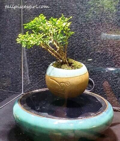 Air Bonsai by UGC