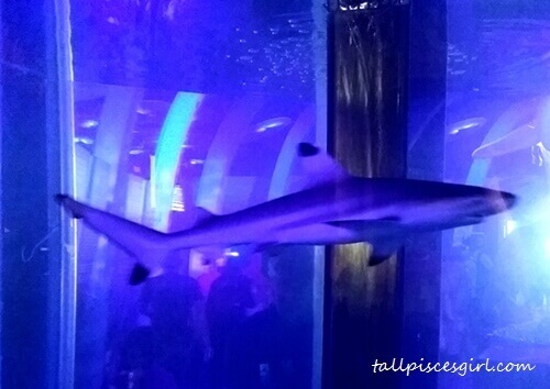 Sharks swimming around in the aquarium