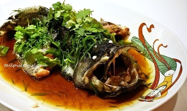 Steamed Live Tiger-Dragon Grouper with Scallion and Ginger (豉皇蒸龙虎班)