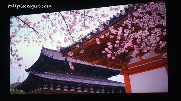 Experiencing Hanami through HD video