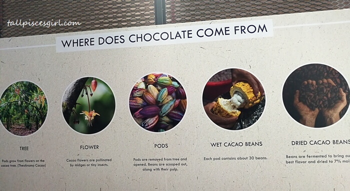 Where does chocolate come from