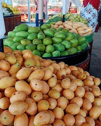 Lots of Mango varieties available at MBG Selayang Fruit Hub